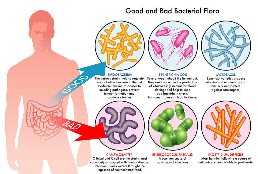 Image result for gut microbiome